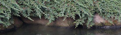 Plants around garden Pond