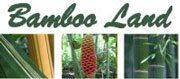 Bamboo land