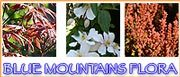 Blue Mountains Flora