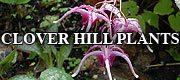 CLOVER HILL PLANTS