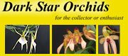 Dark Star Orchids