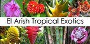 El Arish Tropical Exotics