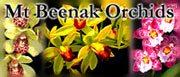 Mt Beenak Orchids