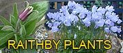 RAITHBY PLANT NURSERY