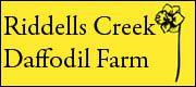 Riddells Creek Daffodil Farm