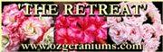 The Retreat Pelargoniums