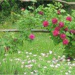 A Dozen Roses – Favourite Twelve Roses