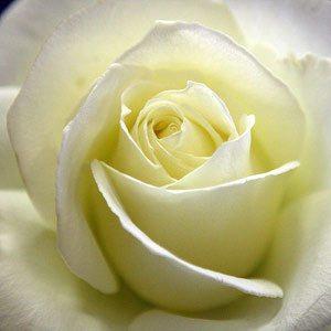 Tineke Rose