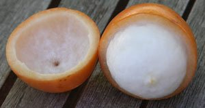 Garcinia humilis or achachair?? fruit