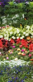 Cottage Garden Plants in the Perennial Border