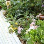 No Dig Vegetable Gardens