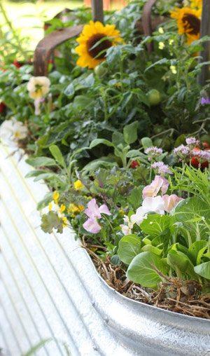No Dig Vegetable Garden Kit