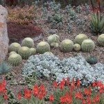 Succulent Plants for Sale – for Australian Gardens