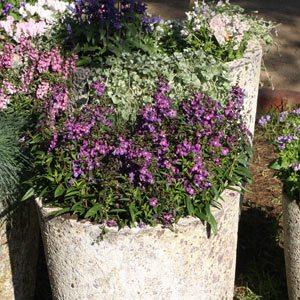 Aged Garden Pots Perth