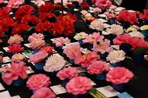 Camellia Garden Show