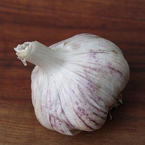 Garlic variety Monaro Purple