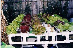 hydroponic vegetable garden