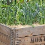 Vegetable Growing Systems