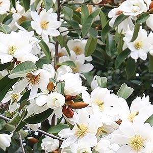 Good Flowering Hedge