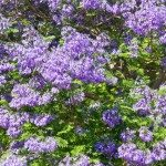 Trees and Shrubs Index