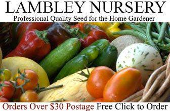 Lambley Nursery