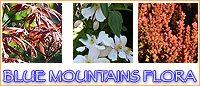 Blue Mountains Flora