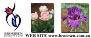 BROERSEN BULBS Pty Ltd
