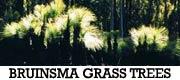 Bruinsma Grass Trees