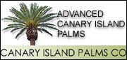 Canary Island Palm Company