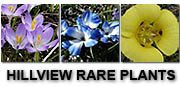 Hillview Rare Plants
