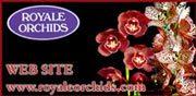 Royale Orchids
