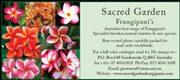 Sacred Gardens Frangipanis