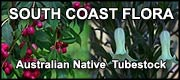 South Coast Flora