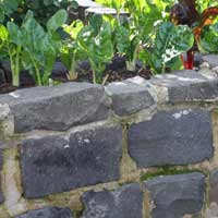 Bluestone Pitchers in Garden Wall