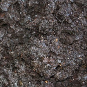 Home made compost