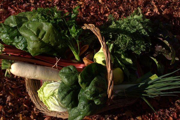 Hybrid vegetables