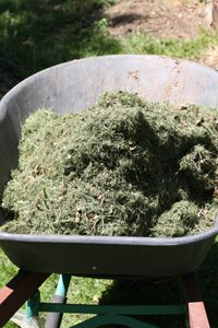Lawn Clippings for compost