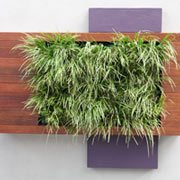 Living Wall Decor