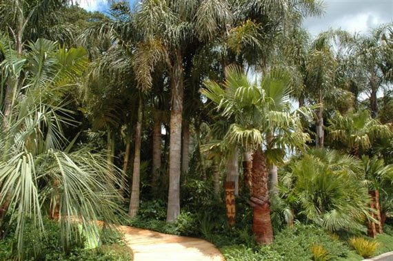Palm Trees in Garden Design