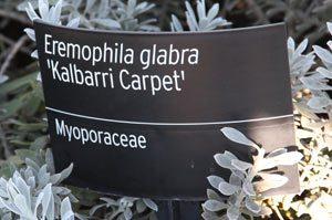 Plant Marker for Australian Native Garden