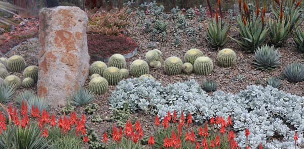 A z list of succulents for garden and container for Garden design using succulents