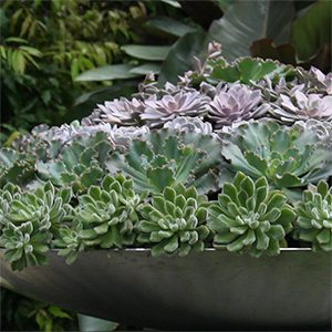 Succulent Plants Container Grown