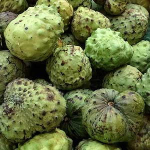 Picture Of A Custard Apple