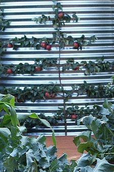 Espalier for a small garden