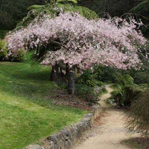 flowering-trees-in-landscape