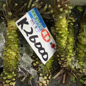 Fresh Wasabi Root in Japanese Market