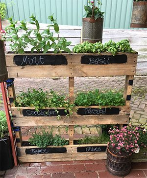 c2fd925038b3 How to Grow your own Herbs & Spices in the garden or container