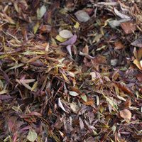 Autumn leaves for compost