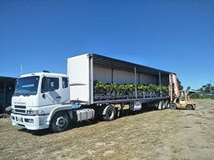 Loading  Mango and Citrus H.S Nurseries
