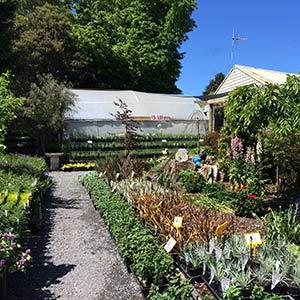 Paddyu0027s Plants Garden Centre